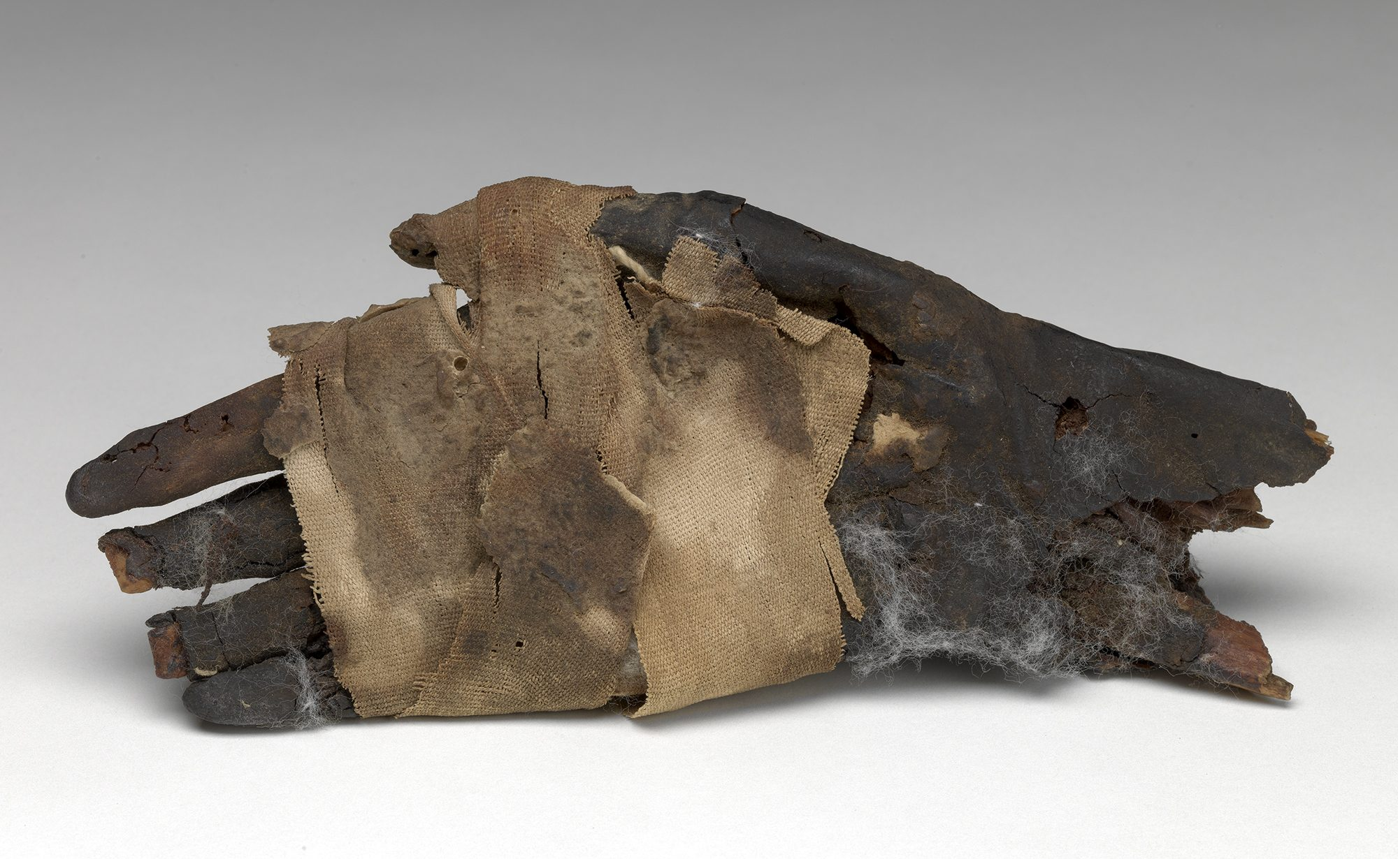 Egyptian, Mummified Hand, ca. 70-230 AD. Roman Period. Human remains, linen, oil resin, 8 1/8 x 3 1/8 in. Anonymous gift, SEG.10.27.