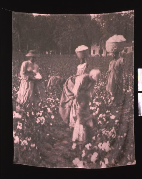 "An image of Carrie Mae Weems' ""Cotton Picking"" from the Hampton Project series"